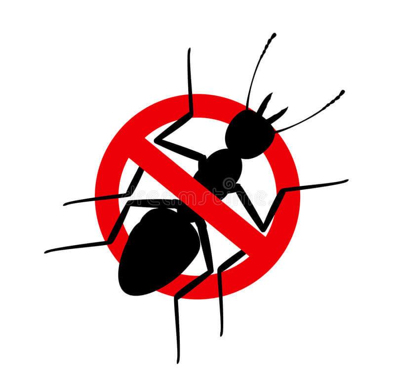 deratizare furnici