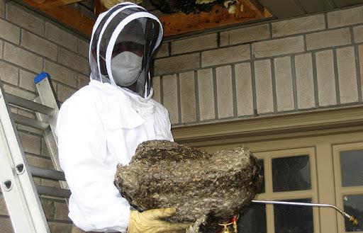 dezinsectie deratizare viespi